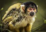 Cute Monkey III