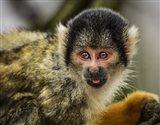 Cute Monkey V