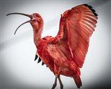 Red Bird IIII