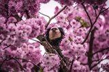Blossem Tree Monkey II