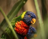 Colorfull Bird IV
