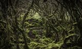 Mossy Forest 2