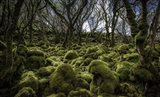 Mossy Forest 3