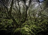 Mossy Forest 6