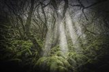 Mossy Forest 5
