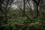 Mossy Forest 7