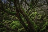 Mossy Forest 8