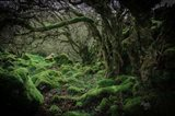 Mossy Forest 9