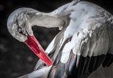 The Stork III