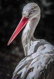 The Stork 7