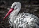 The Stork V