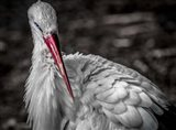 The Stork VI