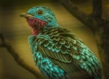Colorfull Bird V