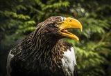 Steller Eagle 7B