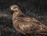 Predator Bird II