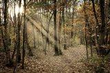 Autumn Sun 2