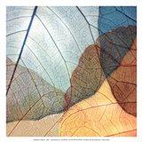Blue and Orange Leaves II