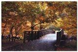 Autumn Overpass