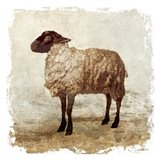Rustic Sheep