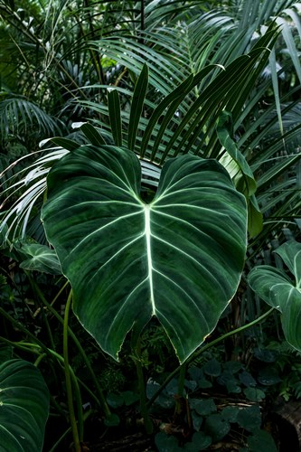 Tropical 3 Poster by PhotoINC Studio for $43.75 CAD