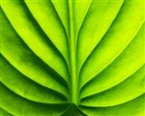 Green Design 2