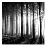 Wood Light