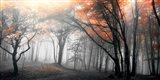 Autumn Woods 1
