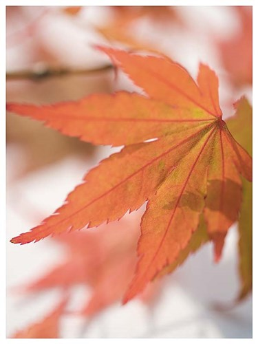 Red Leafs Poster by Martina Schindler for $11.25 CAD