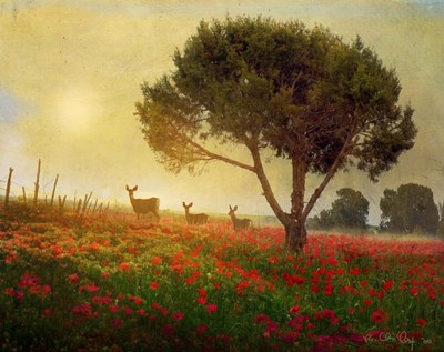 Trees Poppies Deer Poster by Chris Vest for $55.00 CAD