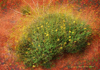 Yellow Flowers Orange Sand Poster by Chris Vest for $46.25 CAD