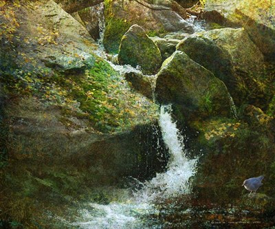 Waterfall With Dipper Poster by Chris Vest for $50.00 CAD