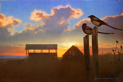 Magpies At Sunset Poster by Chris Vest for $43.75 CAD