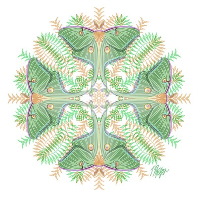 Fern Forest Luna Moth Mandala Poster by Tim Phelps for $56.25 CAD