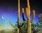 Saguaro Scape