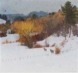 Snowy Creek Elk