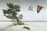 Lone Tree Redtail Hawks