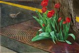 Sparrow,Tulips And Sidewalk