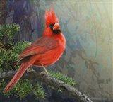Mountain Cardinal