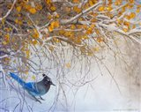Snowy Branches Stellar Jay