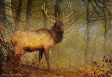 Aspen Forest Bull Elk