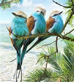 Racquet-Tailed Rollers Oceanview