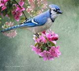 Bluejay Amid Blooms
