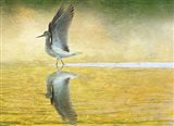 Yellowlegs Wings Up