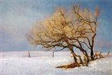 Fox And Winter Oak