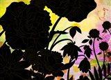 Brassy Begonia F