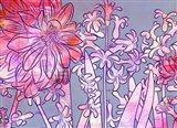 Hyacinth Heaven A