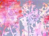 Hyacinth Heaven G