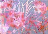 Carnation Creation G