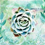Desert Rose Garden