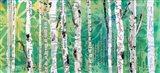 Birches Green